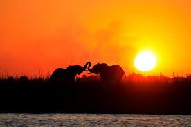 sunset and elepants