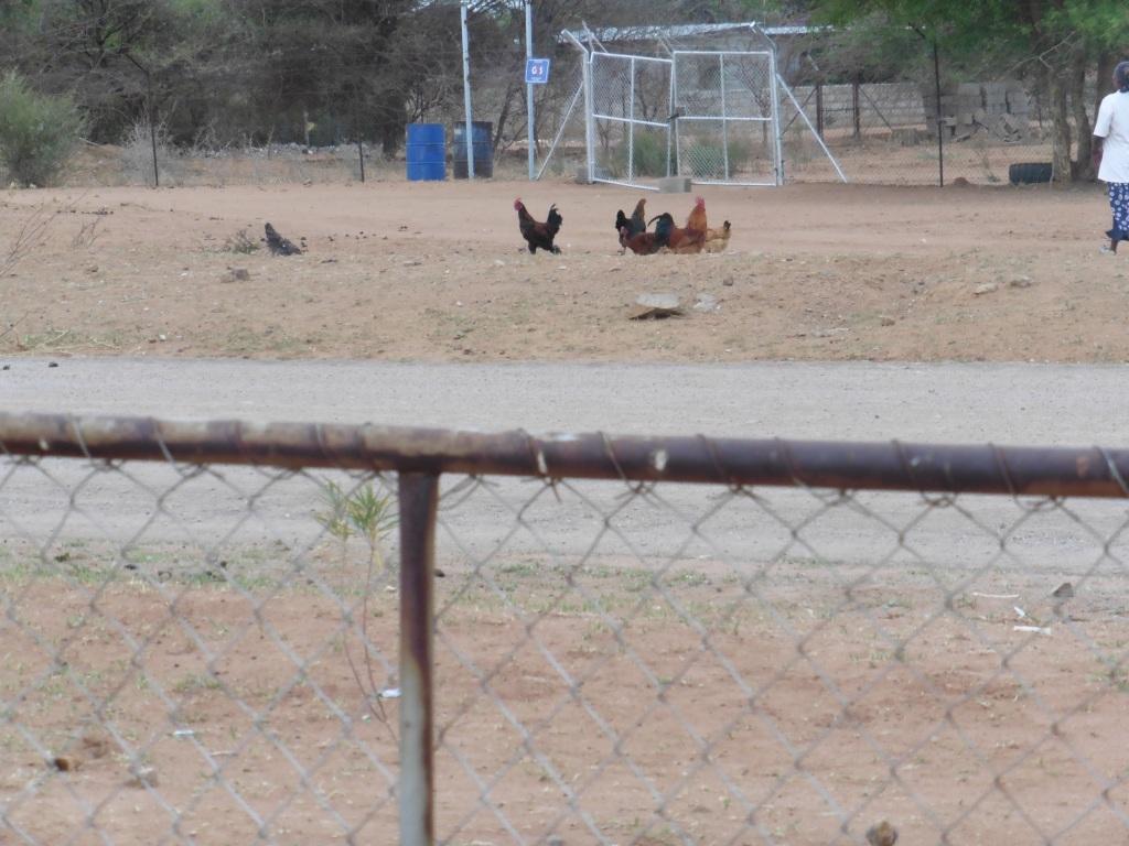 chicken convention
