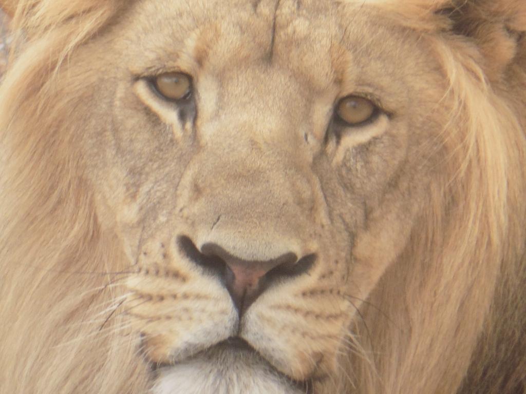 close up head frameable