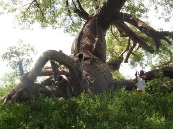 Baines baobabs inside nxai pan park (3)
