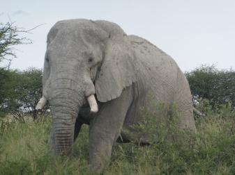 elephants (11)
