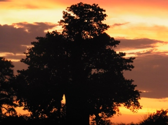 sunset at the waterhole (1)