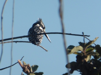 bird 3 (2)