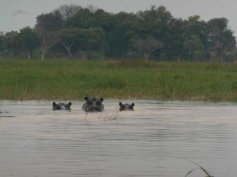 hippo family 2