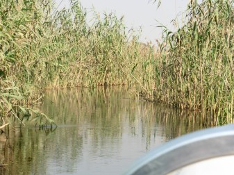 landscape from boat through reeds