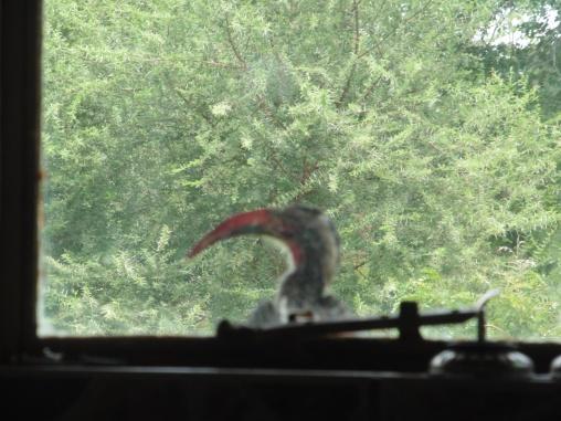 hornbill senyati lodge chalet window