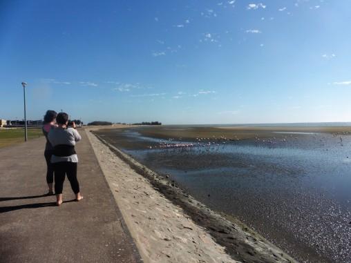 3- Walvis Bay Flamingos 5